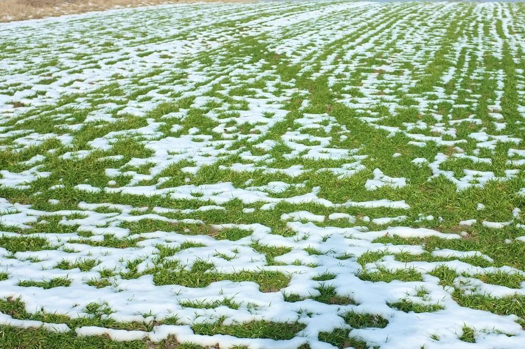 37/365: Green snow