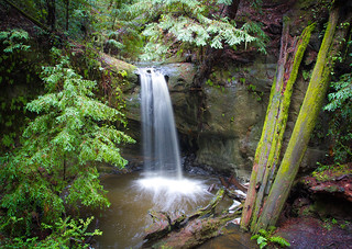 Big Basin Redwood State Park | 3-2-14 | by Christian Arballo