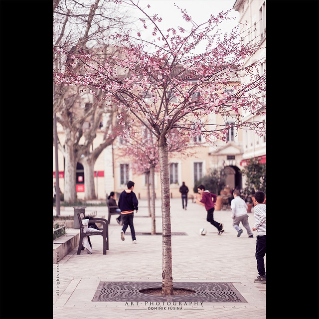 Spring wake up | Fuji x-T1 + 56mm-f/1.2