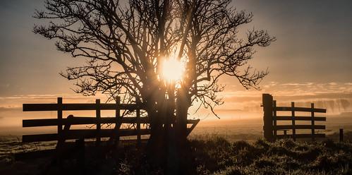 sunlight mist tree netherlands silhouette fog sunrise fence delft rays grassland sundawn middendelfland fencefriday