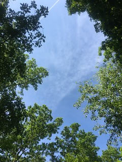 Looking up from a bench at summit of Brush Mountain | by MartinSteel