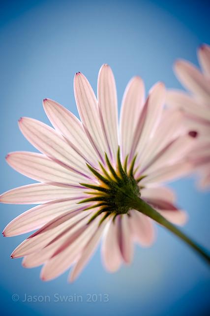 Bring me sunshine... Wild Daisies IMG_0663