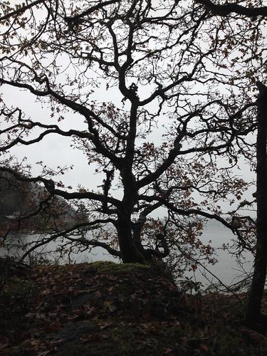 elegy cowichanbay november2013