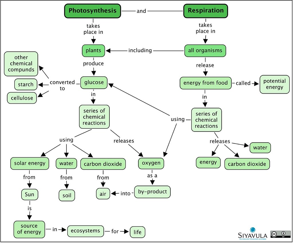 Gr 8 Ch 1 Photosynthesis A Summary Concept Map Of The Flickr