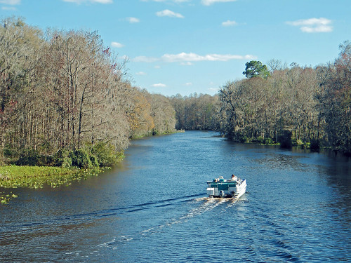 trees water river boat stream florida dunnellon