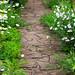 Flower way :)