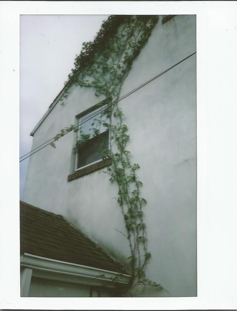 Ivy & Window