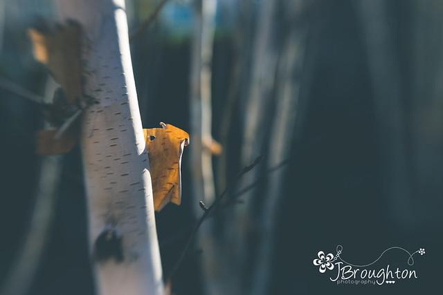 Bark, peeling