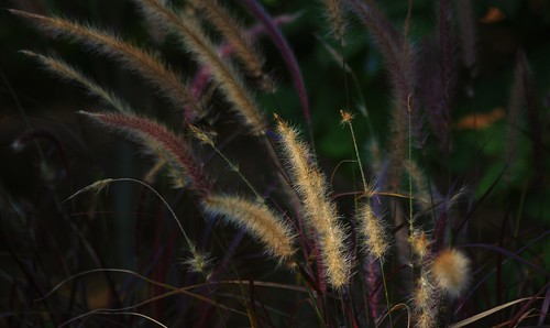 autumn fall grass botanical fallcolor pentax bokeh connecticut newengland ct explore lightandshadow k3 trumbull 2014 vbd smcpentaxda55300mmf458ed fall2014