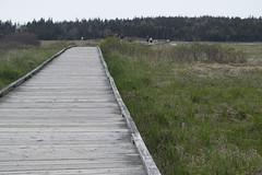 MacCormacks Beach