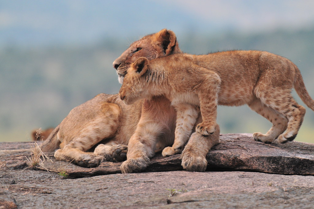 Playful youngsters