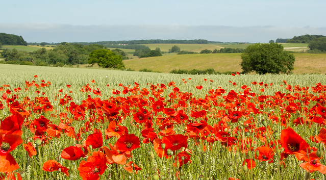 Poppyland in HD
