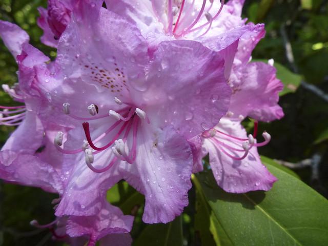 Pamelia Lake Flowers