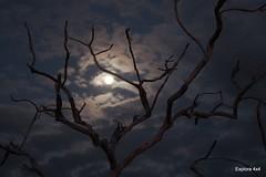 Noite no Jalapão