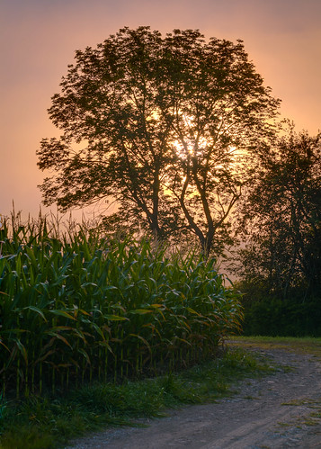 trees plants sun field fog sunrise cornfield unitedstates pennsylvania air agriculture mineralpoint smcpfa50mmf14 enfuse exposurefusion enfuseoutput