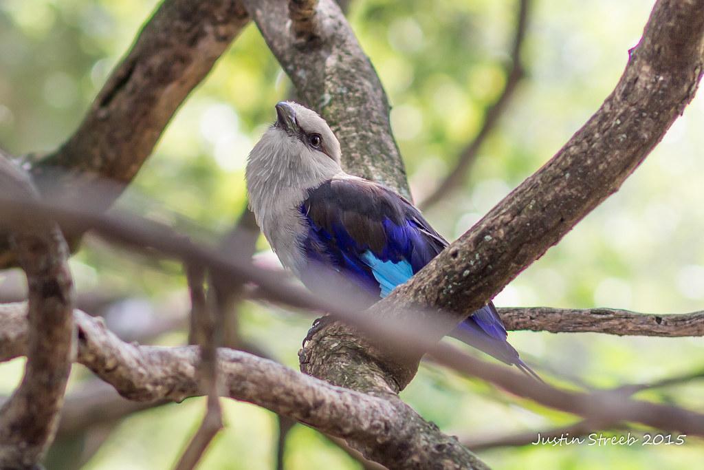 MD Zoo Bird 2