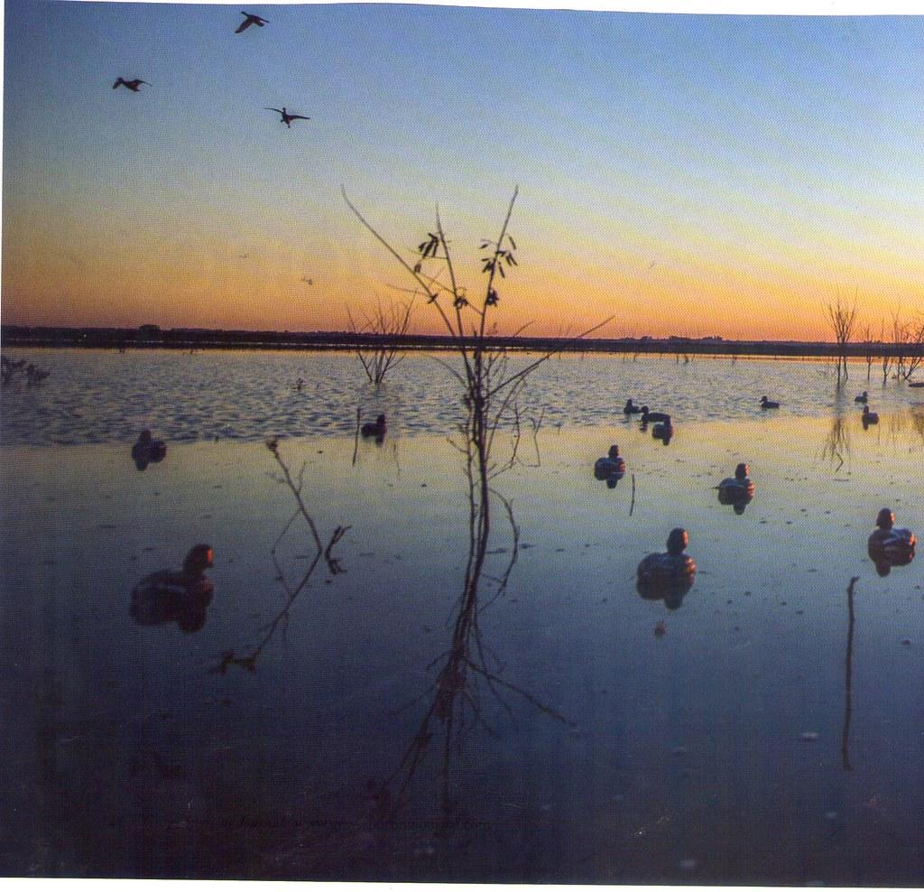 Good Evening Marsh