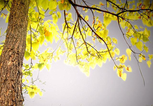 Fall advance