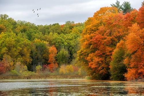 autumn lake fall nature season landscape gold pond foliage newyorkstate westchestercounty armonk