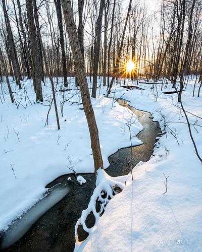 stream creek sun sunrise winter woods snow annarbor michigan unitedstates us