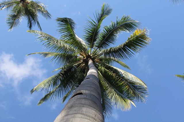 Gumasa Beach: Isla Jardin del Mar