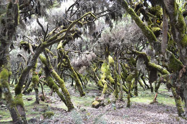 Harenna forest 1