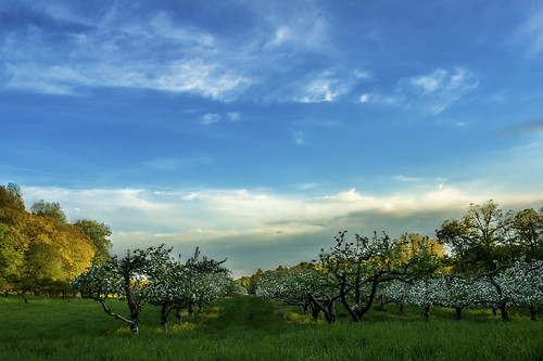 sky color green nature clouds evening spring quiet natural blossoms peaceful orchard mellow baumy