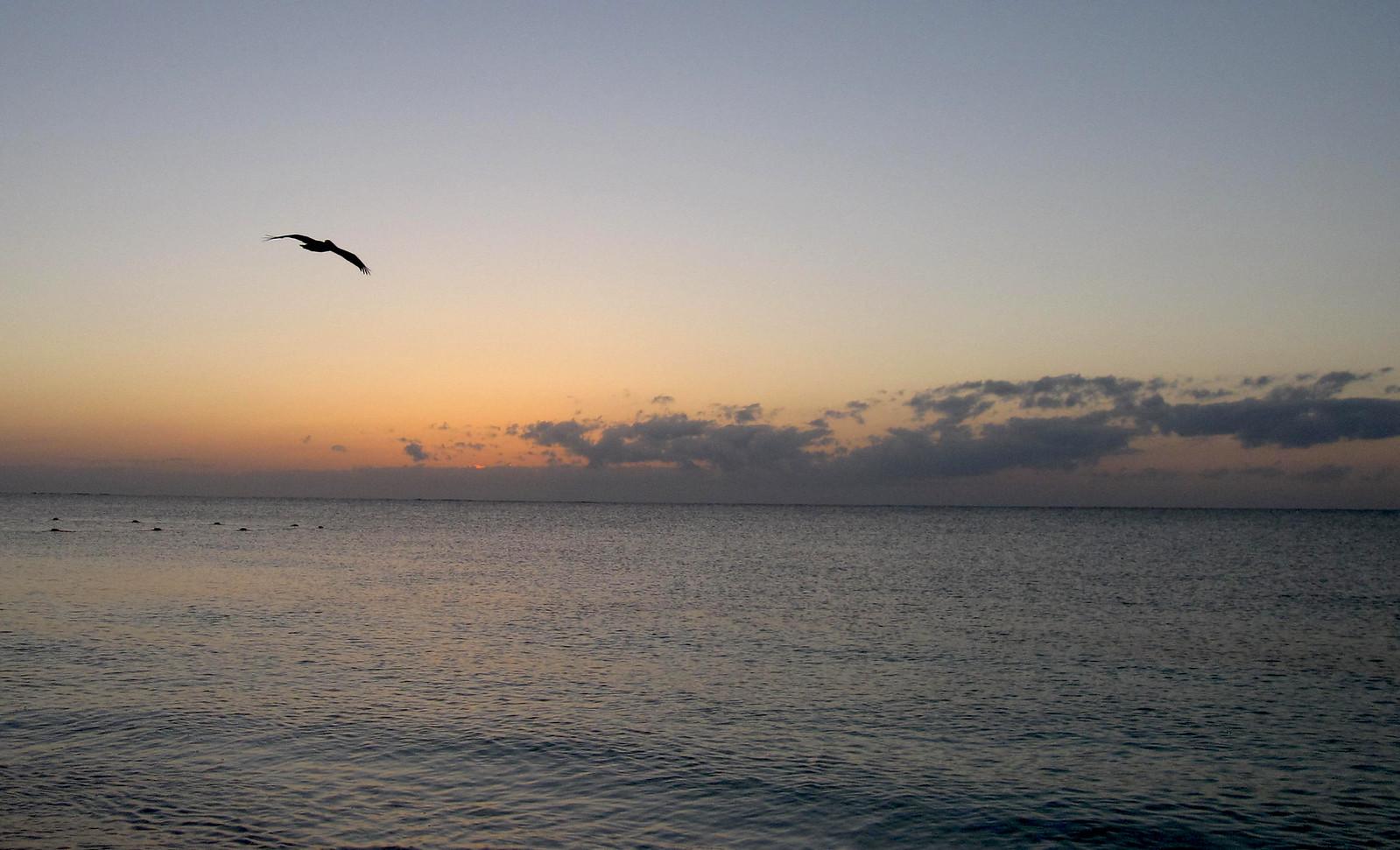 Puerto Morelos 132