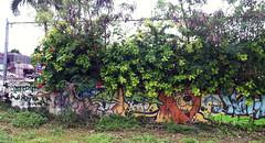 graffiti in shrubbery 1