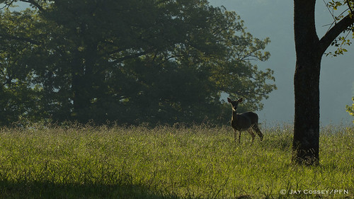 deer arkansas mammalia horseshoebendpark bentonco photographerjaycossey