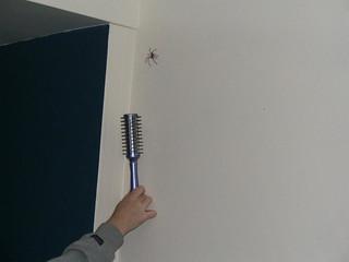 Huntsman Spider | by 3nglishN3rd