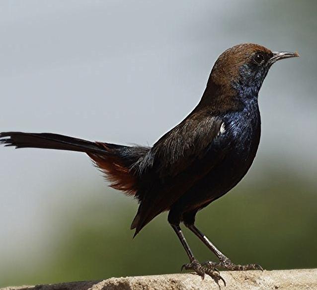 Different kinds of bird @Achrol bagh