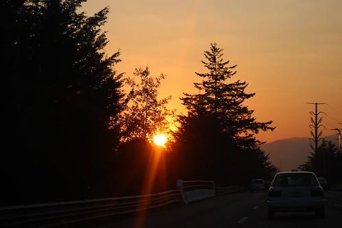 sol arboles amanecer soleado rojizo entrearboles
