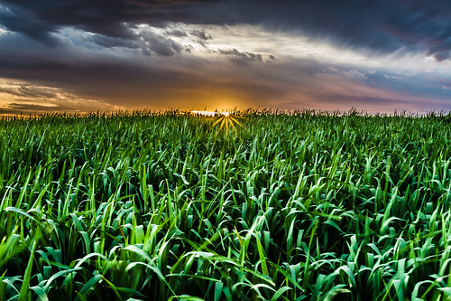 sunset sky sun green nature colors field grass clouds landscape israel daylight horizon reserve olympus panasonic rays negev pura olympuspenepl5 panasonic20mmf17ii panasoniclumixg20mmf17iiasph olympusvf4