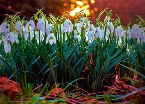 park sunset england london gardens woodland surrey snowdrops bushy paulinuk99999