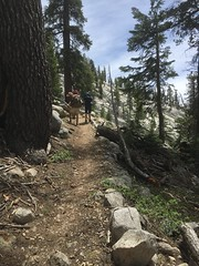 Parco nazionale di Sequoia