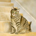 IMG_0405_cat_on_stairsa