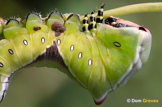 Puss Moth V | by Dom Greves