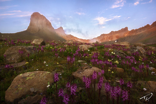 morning flowers mountains beautiful sunrise landscape colorado colorful vibrant vivid professional alpine rockymountains wildflowers sanjuans majestic lupine tylerporter tporterphotography