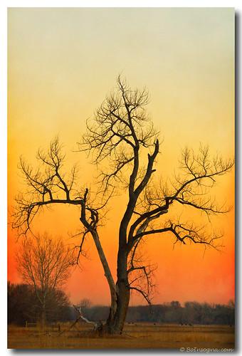 travel trees winter sky orange tree nature season landscape scenery colorado view artgallery dusk scenic sunsets sunrises cottonwoodtree bouldercounty jamesboinsogna