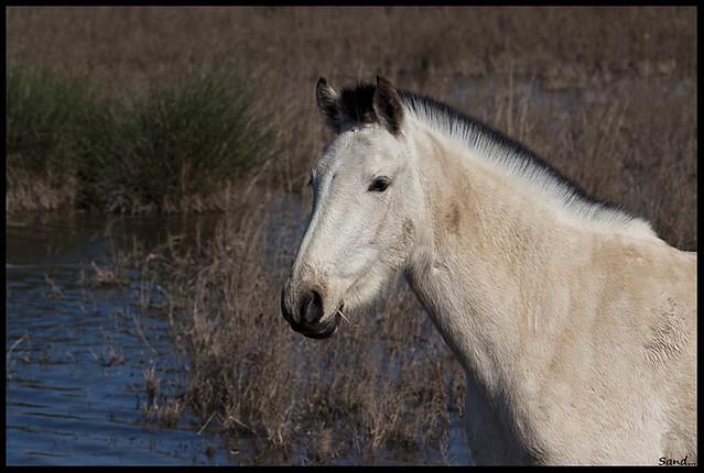 White Horse III