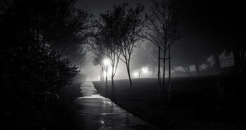 california park white black fog night landscape atmosphere