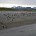 Tučňáci v Ohňové zemi, foto: Karel Janů