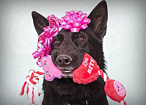 7/52 Ickky; Happy Valentine's Day! | by Falon167