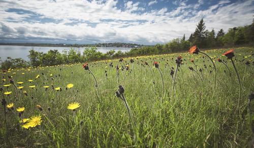 select campobello campobelloisland rooseveltcampobellointernationalpark shore water beach clouds summer canada newbrunswick nb foxfarm field flower grass