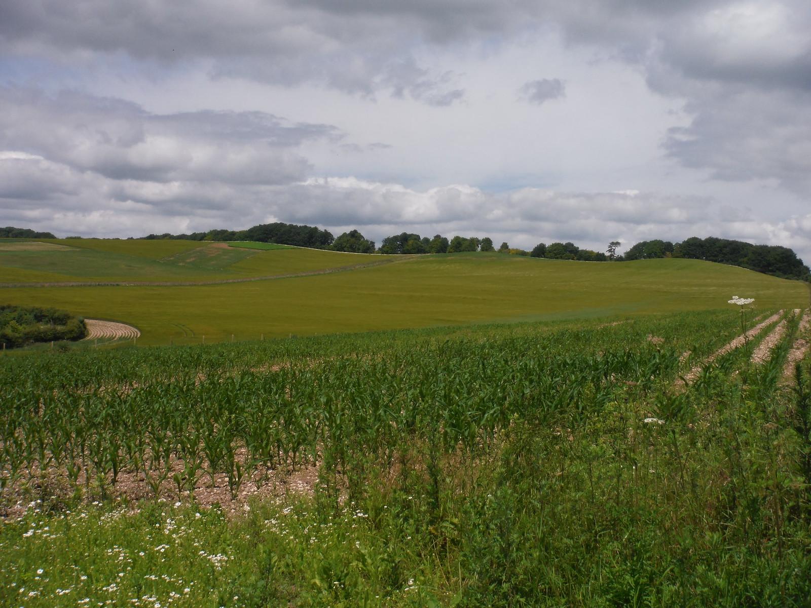 Whiteshoot Hill and Rothes Ridge SWC Walk 265 - Dean to Mottisfont & Dunbridge
