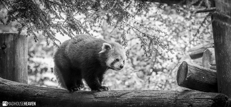Safaripark Beekse Bergen - 0390