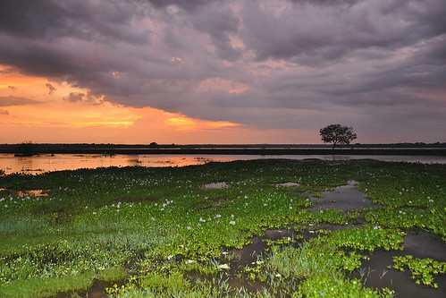 travel ceylon uva uvaprovince wetlands srilanka grasslands southasia asia lake weerawilalake outdoor landscape water sky sunset bright colour purple red blue cloud clouds tree trees plant serene sea field hyacinth dnysmphotography dnysmsmugmugcom