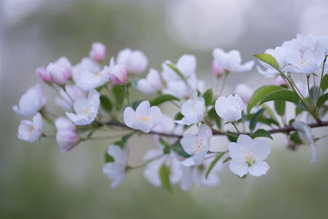 Apple Blossom Eco Challenge 2013
