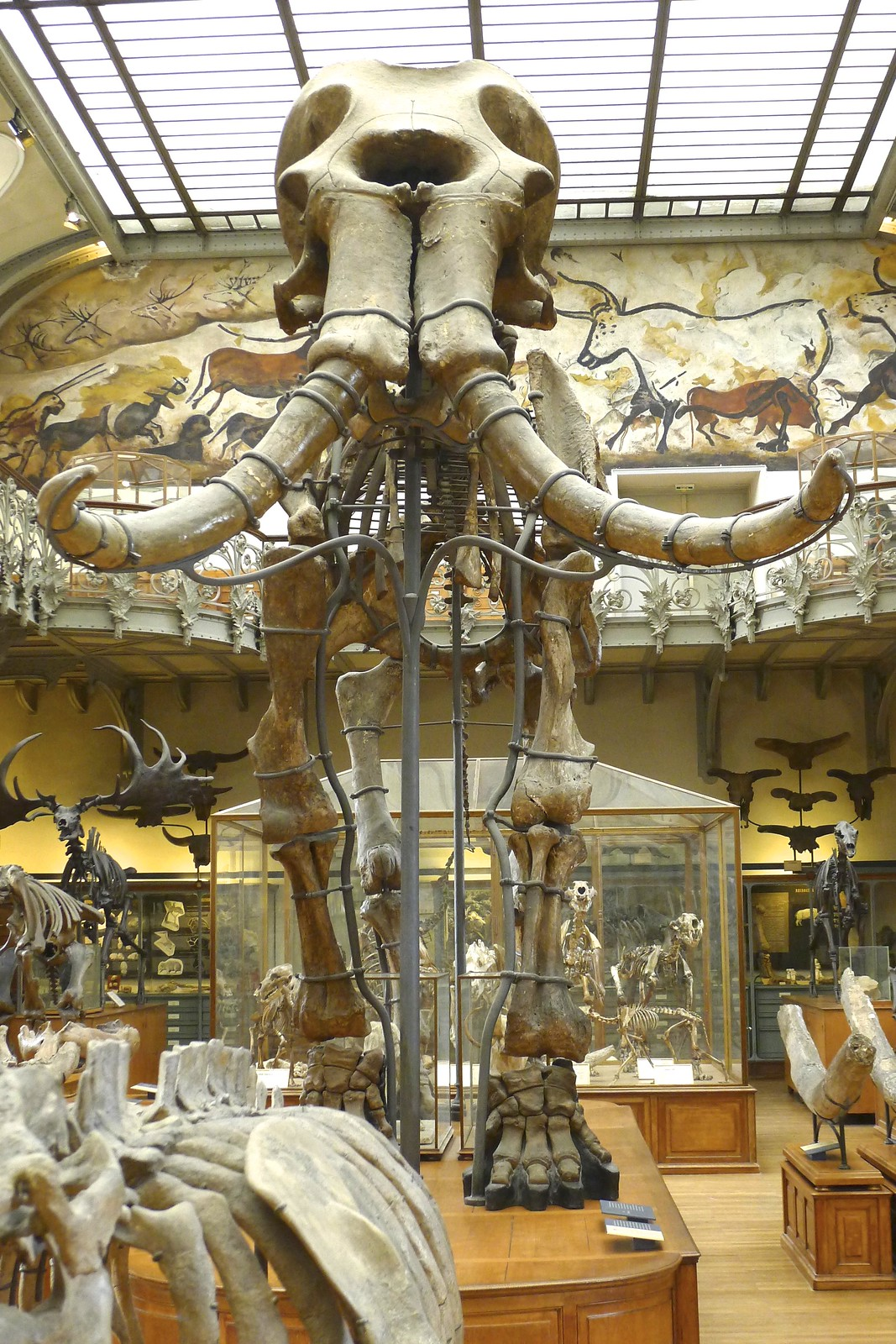 Help the French Natural History Museum to restore a mammoth!